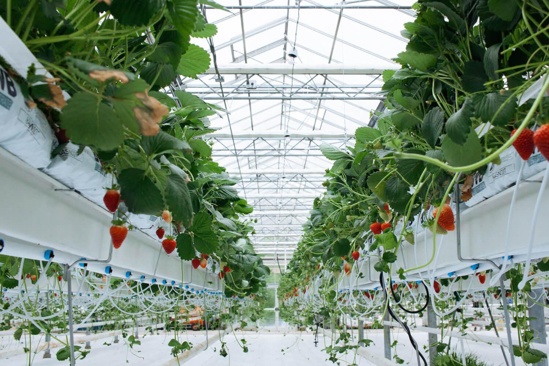 کشاورزی هیدروپونیک
