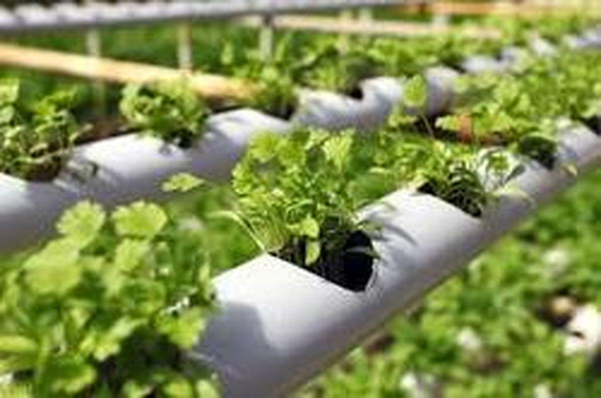 نمایی از کشاورزی هیدروپونیک