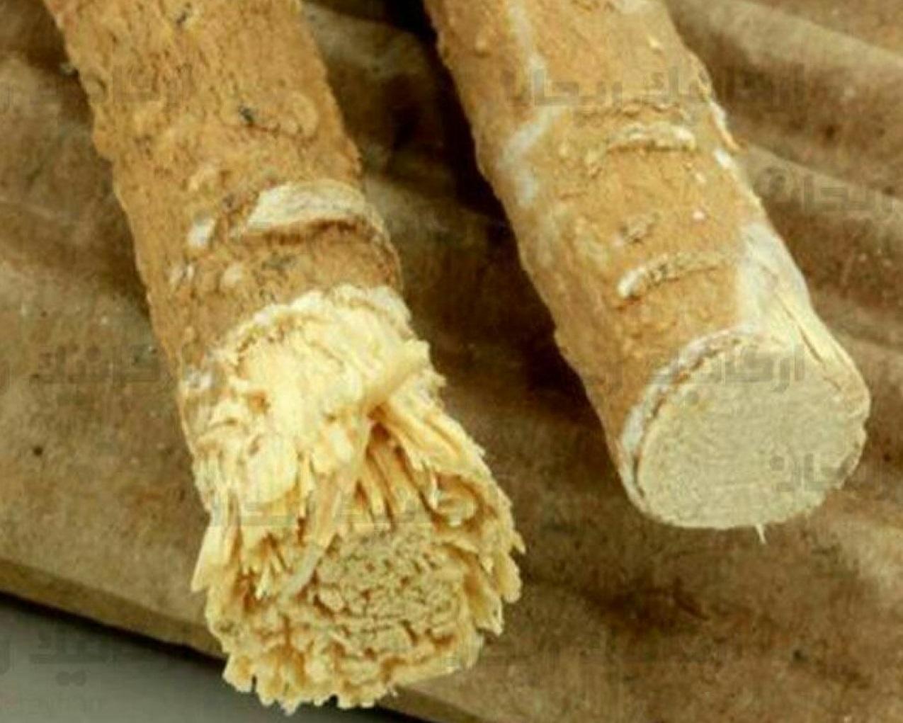 چوب درخت مسواک که در قدیم به عنوان مسواک از آن استفده میشد.
