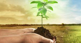 هیومیک اسید و کاربرد آن در کشاورزی